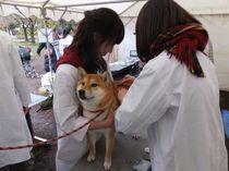 【千住キャンパス】11/23(水・祝)小動物栄養学研究室が「わんフェス」に参加しました!