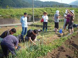 写真1. 桂川・相模川流域協議会のスタッと共同で、水路のシジミ調査を行っているところ。(H16,夏)