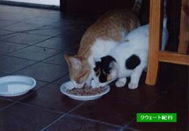 近所の猫。キッチンまで入り込んできた